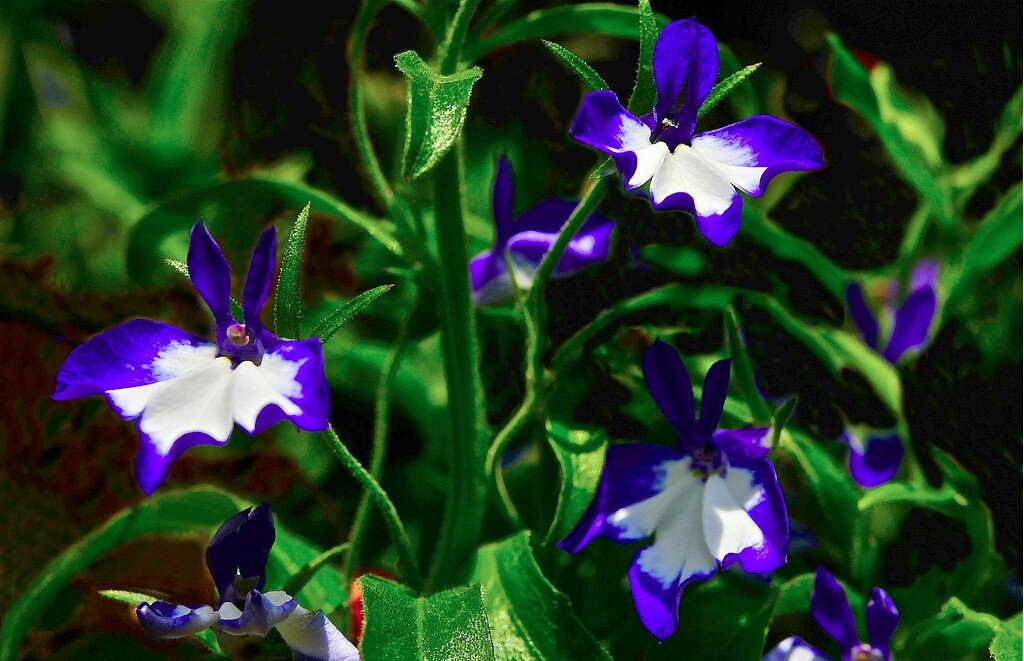 Lobelia Inflata Leaf Cut and Sifted 4 oz 1