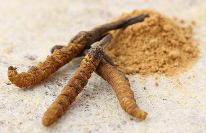 Cordyceps Sinensis Mushroom Powder 4:1 Extract 50g 1
